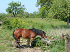Foto paard in weide