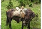 Foto paard trekking
