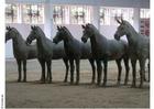 Foto paarden Xian