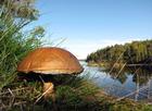 Foto paddenstoel