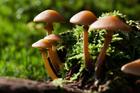 Foto paddenstoelen