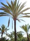 Foto palmbomen