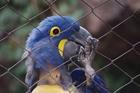 Foto papegaai in kooi
