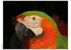 Foto papegaai