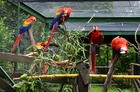 Foto papegaaien in kooi
