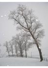 Foto sneeuw - winterlandschap
