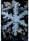 Foto sneeuwkristallen onder een microscoop