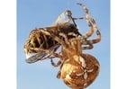 Foto spin neemt wesp
