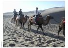 Foto trektocht door woestijn op kamelen