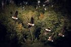Foto trekvogels