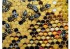 Foto verschillende soorten opgeslagen stuifmeel