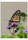 Foto vlinder 2