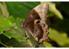 Foto vlinder