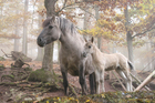 Foto wilde paarden