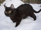 Foto zwarte kat