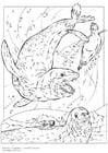 Kleurplaat Luipaardzeehonden