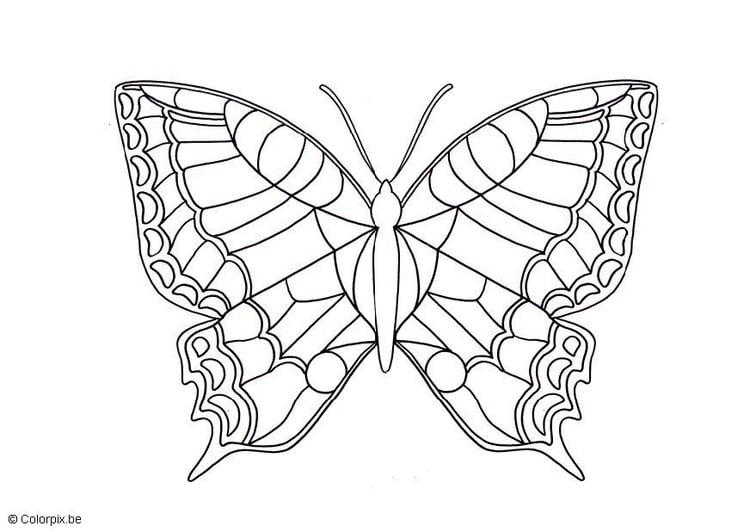 Kleurplaat Vlinder Afb 5672