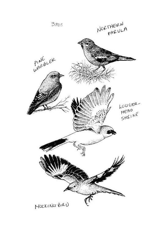 Kleurplaat Vogels Afb 8548