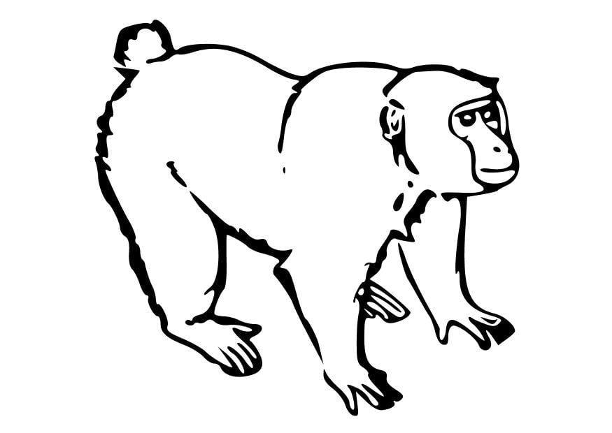 kleurplaat aap afb 10252