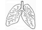 Kleurplaat ademhalingsstelsel