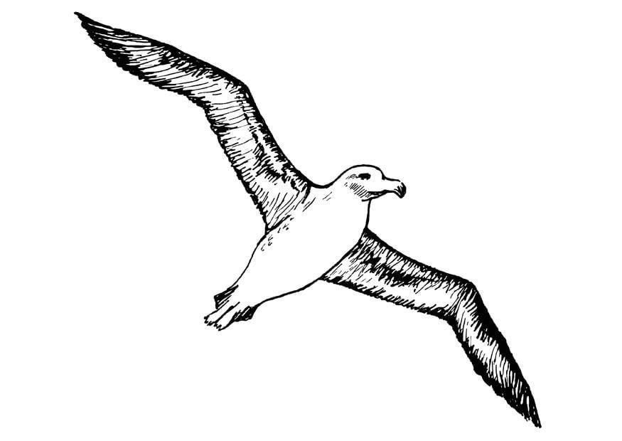 Adelaar Kleurplaat Kleurplaat Albatros Afb 13702