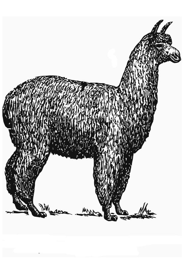 Kleurplaten Dieren Google Kleurplaat Alpaca Afb 13706 Images