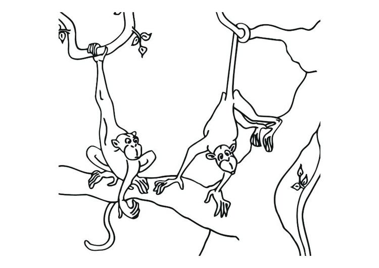 Kleurplaten Van Aapjes.Kleurplaat Apen Afb 12532