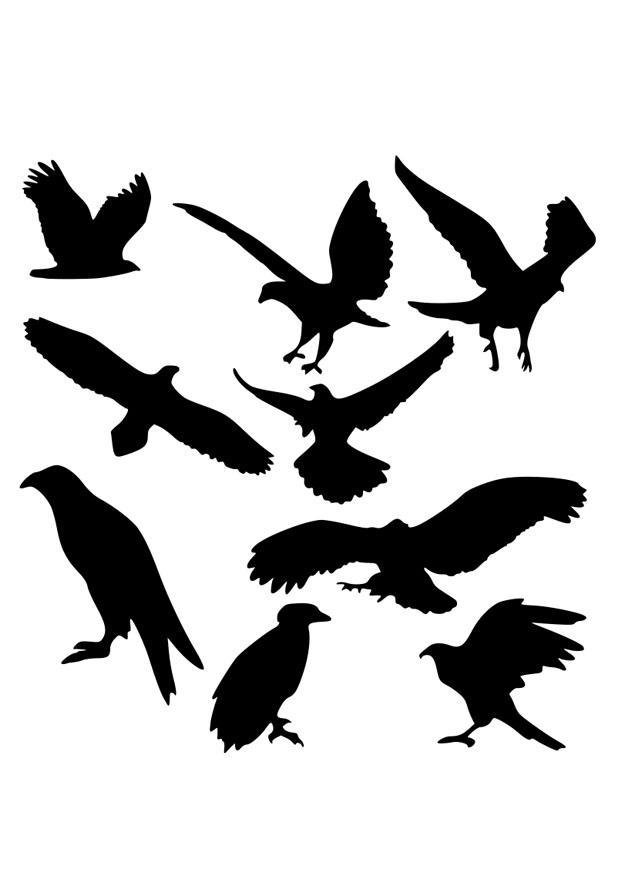 Afbeeldingen Vogels Kleurplaten Kleurplaat Arend Silhouetten Afb 26295 Images