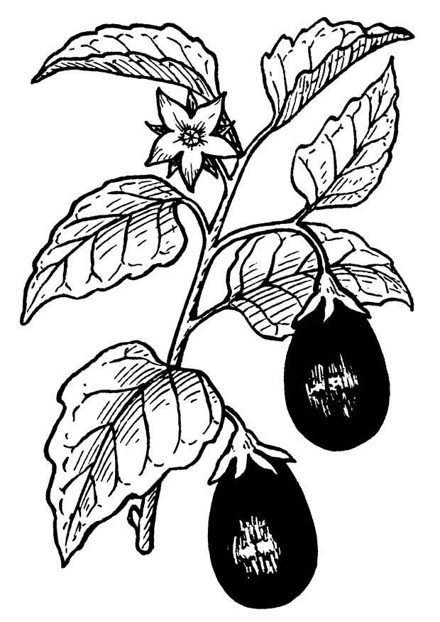 kleurplaat aubergine gratis kleurplaten om te printen