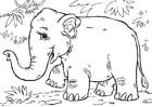Kleurplaat Aziatische olifant
