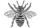 Kleurplaat bijenkoningin
