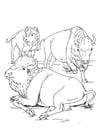 Kleurplaat bizons