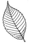 Kleurplaat blad