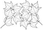 Kleurplaat bladeren