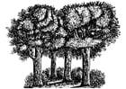 Kleurplaat bomen