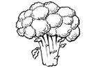 Kleurplaat broccoli
