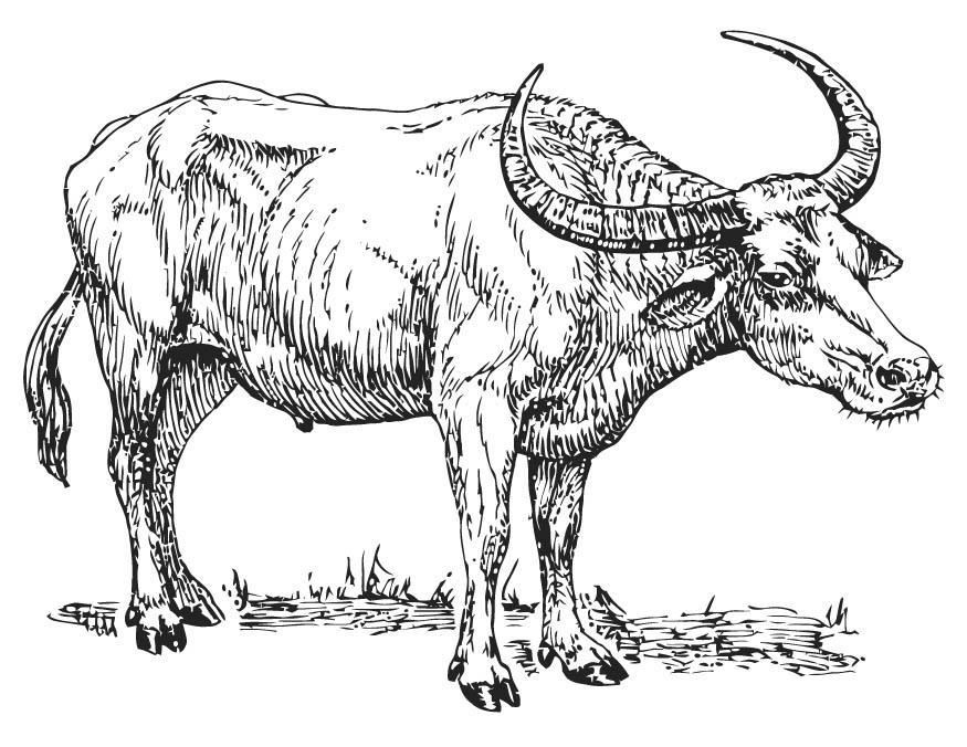 Kleurplaat Buffel Afb 15701