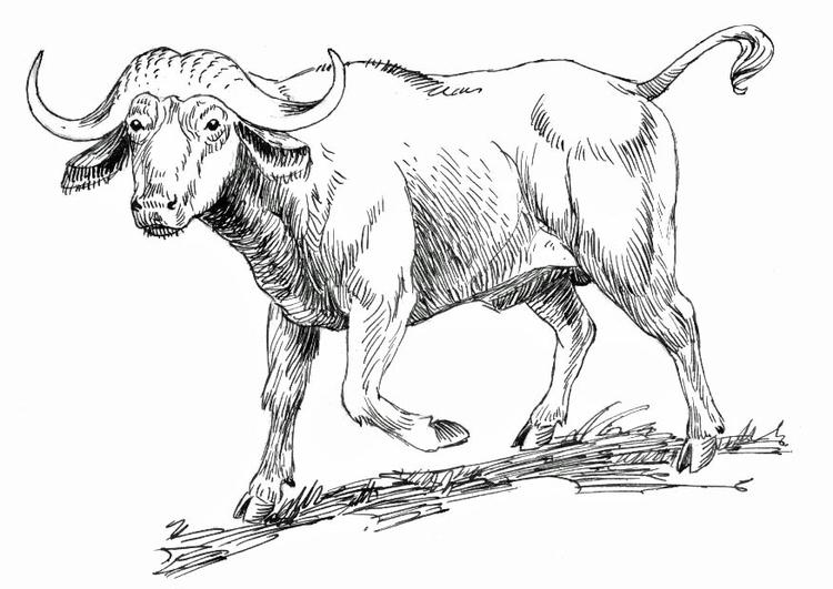 kleurplaat buffel afb 16634