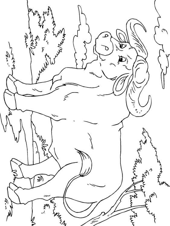 kleurplaat buffel afb 23014