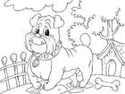 Kleurplaat bulldog