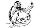 Kleurplaat capucijn aapje
