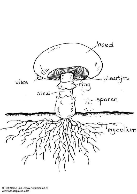 kleurplaat champignon