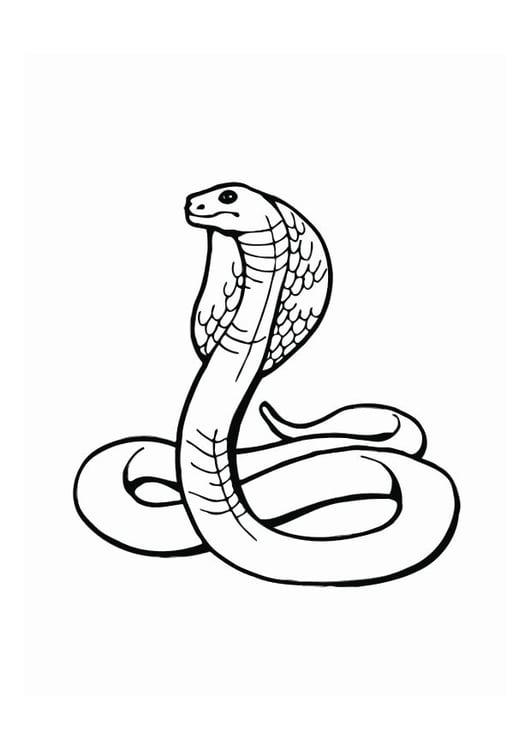 kleurplaat cobra afb 12539