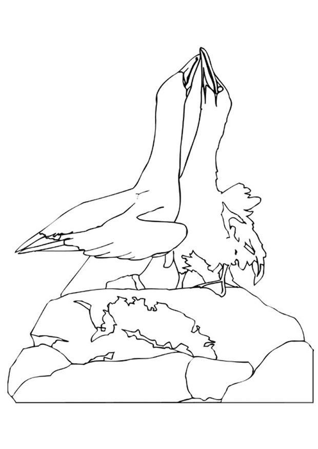 Afbeeldingen Vogels Kleurplaten Kleurplaat Dansende Jan Van Gents Afb 9450