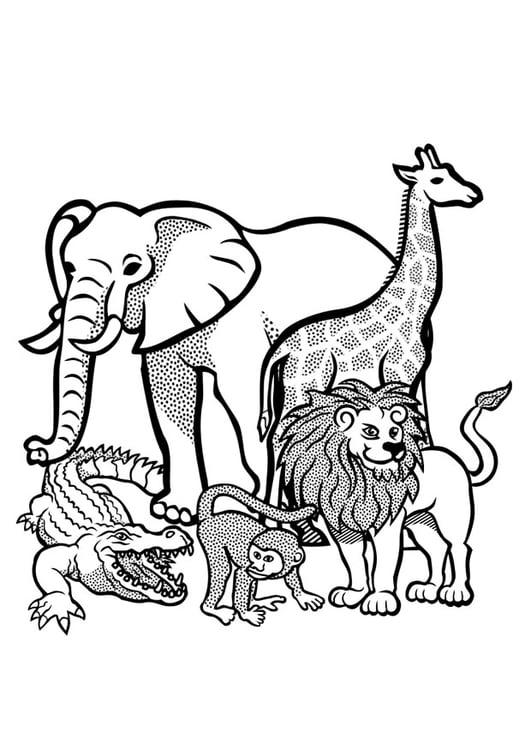 Kleurplaat Dieren In Het Wild Afb 29436