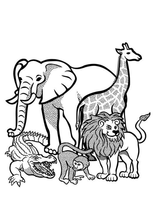 Kleurplaat dieren in het wild - Afb 29436.