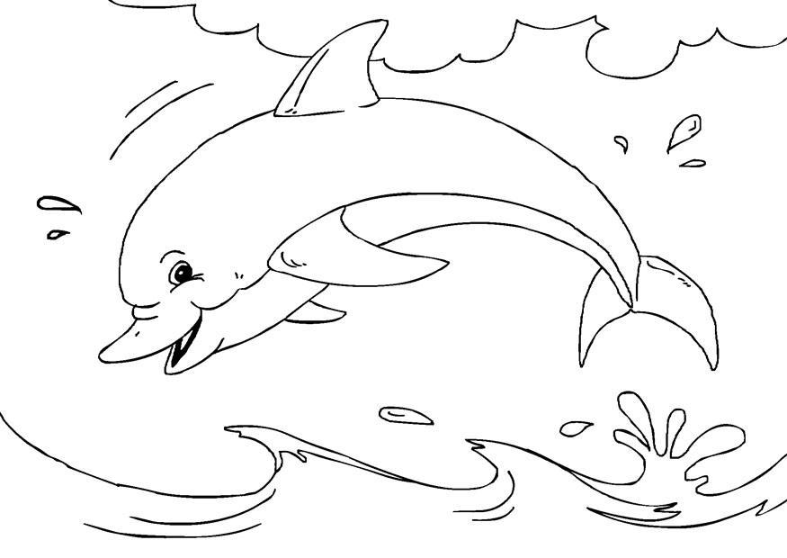 Afbeelding Dolfijn Kleurplaat Kleurplaat Dolfijn Afb 27233 Images