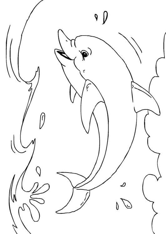 Kleurplaat Grappige Dieren Kleurplaat Dolfijn Afb 27233