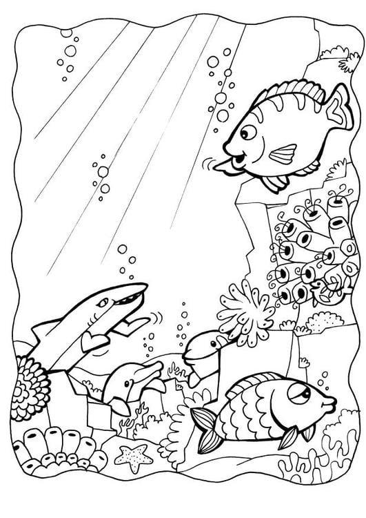Afbeelding Dolfijn Kleurplaat Kleurplaat Dolfijnen Met Vissen Afb 7084