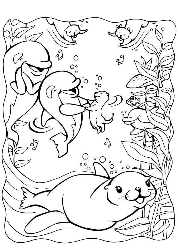 Kleurplaten Dolfijnen En Zeehonden.Kleurplaat Dolfijnen Met Zeehond Afb 7085